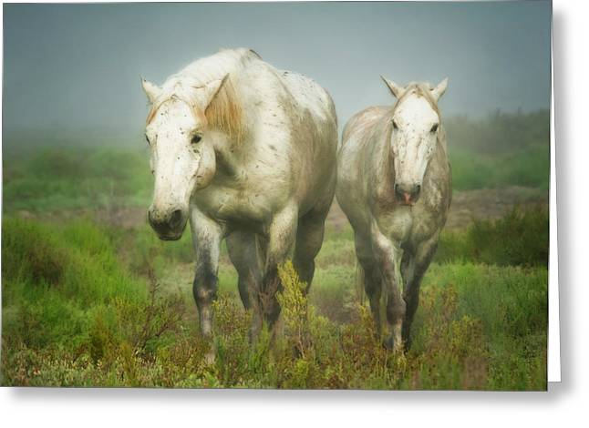 White Horses Of Camargue In Field Greeting Card