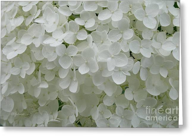 White Hydrangea Greeting Card