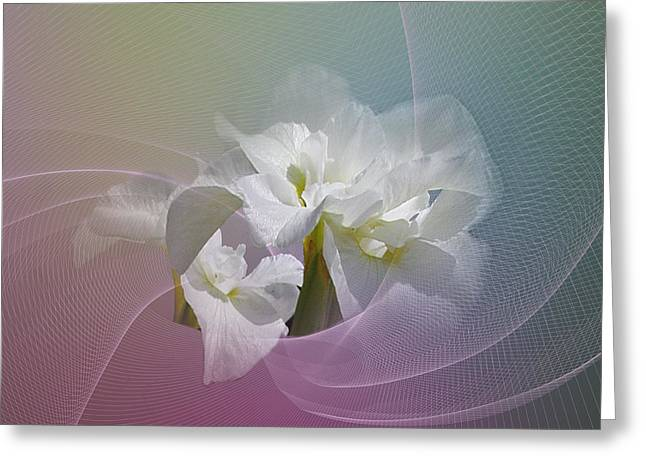 Greeting Card featuring the photograph White Iris by Judy  Johnson