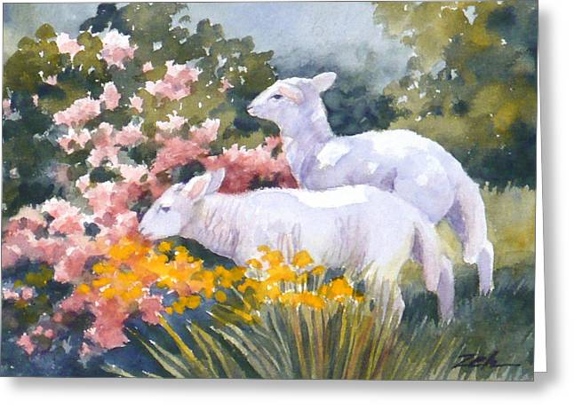 White Lambs In Scotland Greeting Card