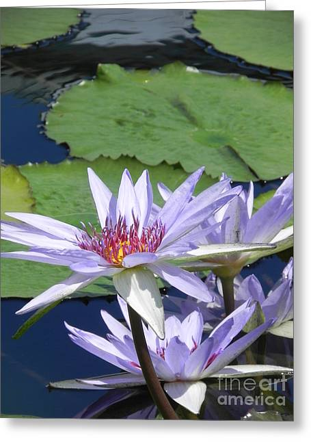Greeting Card featuring the photograph White Lilies by Chrisann Ellis