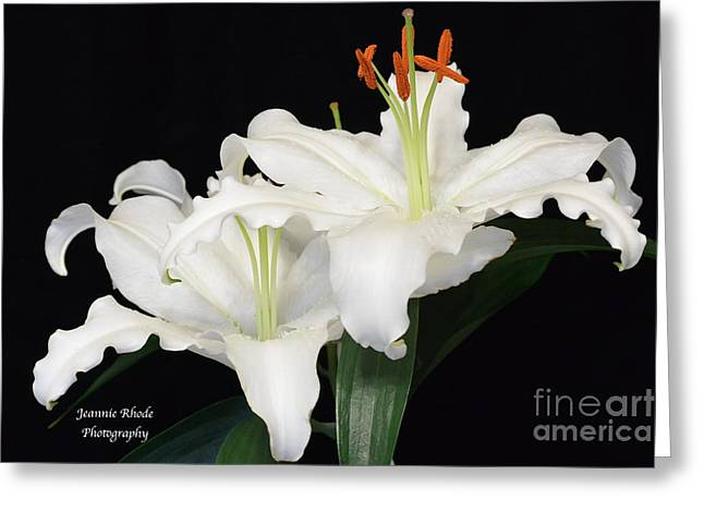 Greeting Card featuring the photograph White  Lilies by Jeannie Rhode