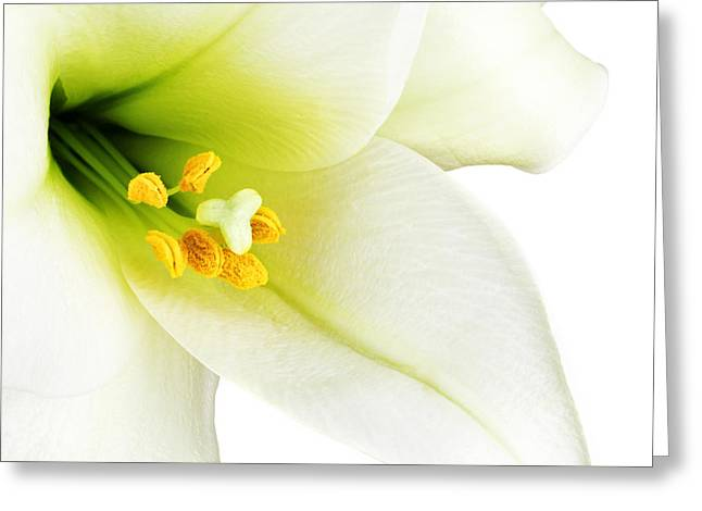 White Lilly Macro Greeting Card by Johan Swanepoel