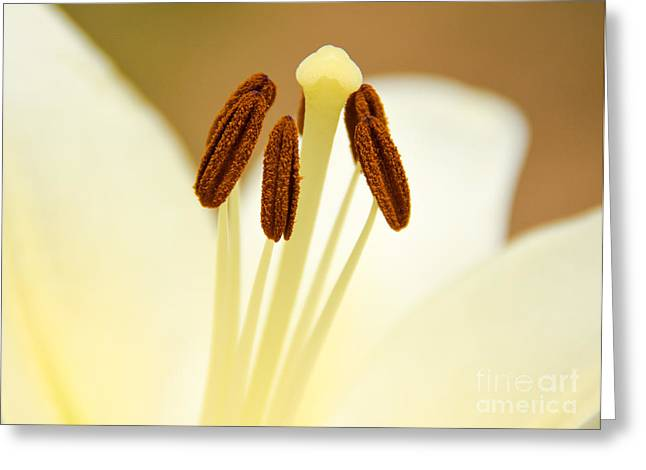 White Lily #2 Greeting Card by Lisa L Silva
