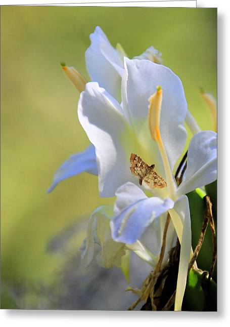 White Lily And The Skipper Greeting Card by Rosalie Scanlon