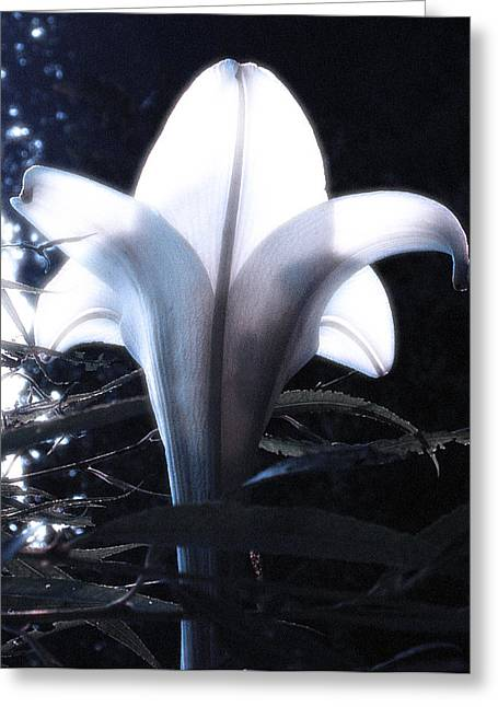 White Lily By Jan Marvin Greeting Card