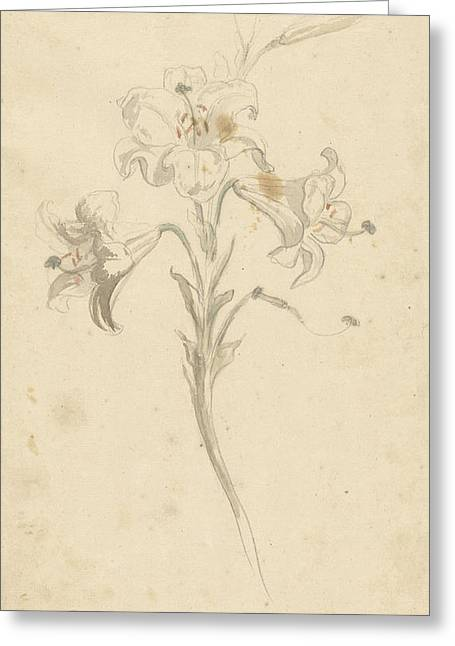 White Lily, Elias Van Nijmegen Greeting Card by Quint Lox