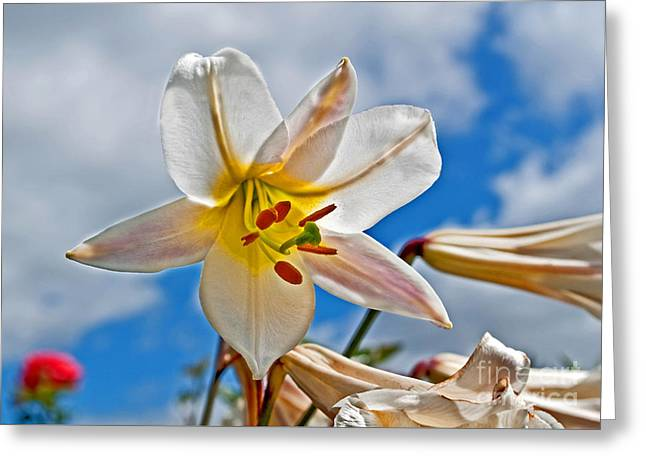 White Lily Flower Against Blue Sky Art Prints Greeting Card