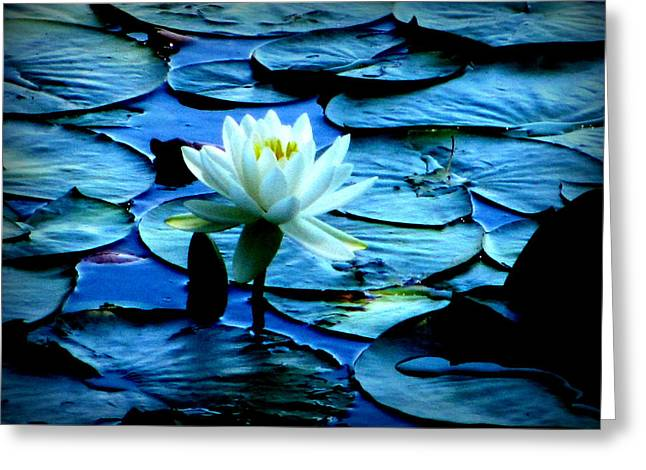 White Lily Greeting Card by Maria Scarfone