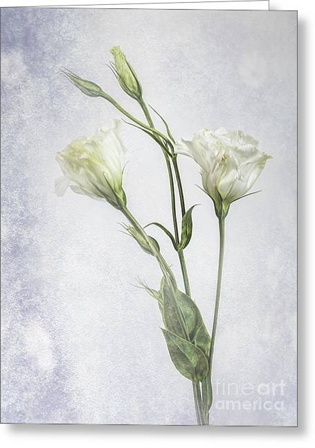 White Lisianthus Flowers Greeting Card