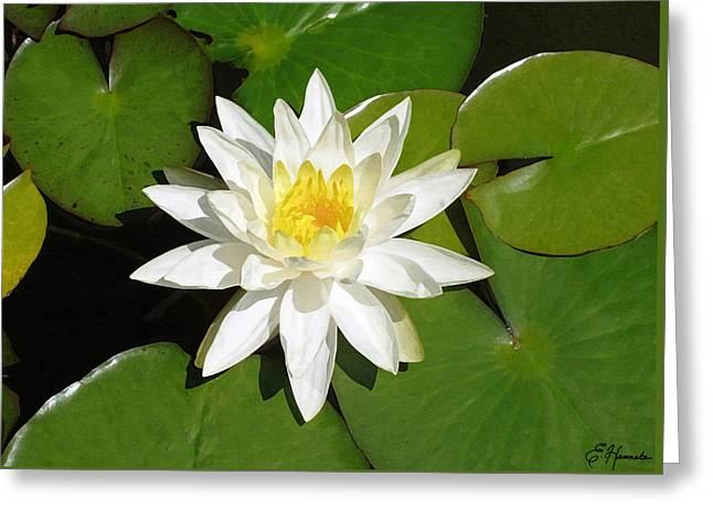 White Lotus 1 Greeting Card by Ellen Henneke