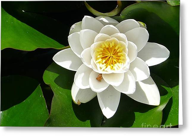 White Lotus Heart Leaf  Greeting Card