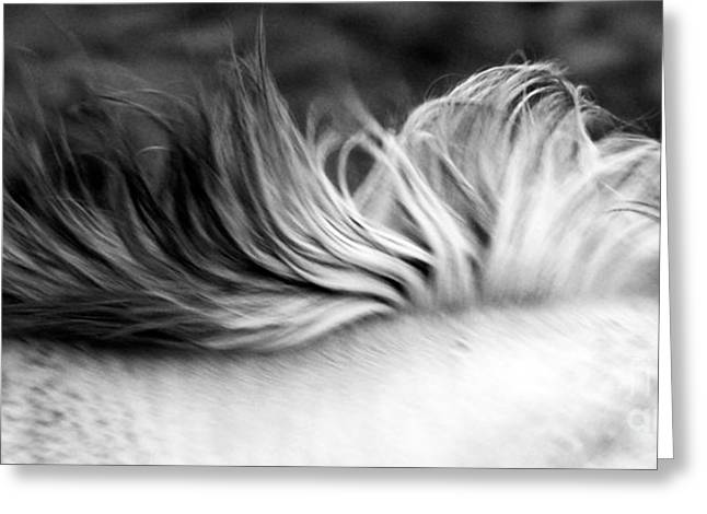 White Mare Mane Number One Close Up Panoramic Black And White Greeting Card