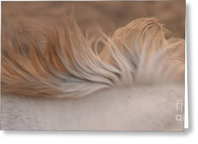 White Mare Mane Number One Close Up Panoramic Muted Greeting Card by Heather Kirk