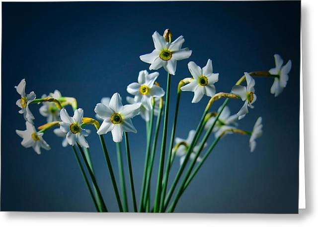 White Narcissus On A Dark Blue Background Greeting Card
