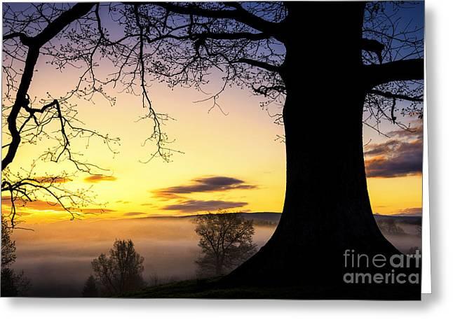 White Oak At Sunrise Greeting Card by Thomas R Fletcher