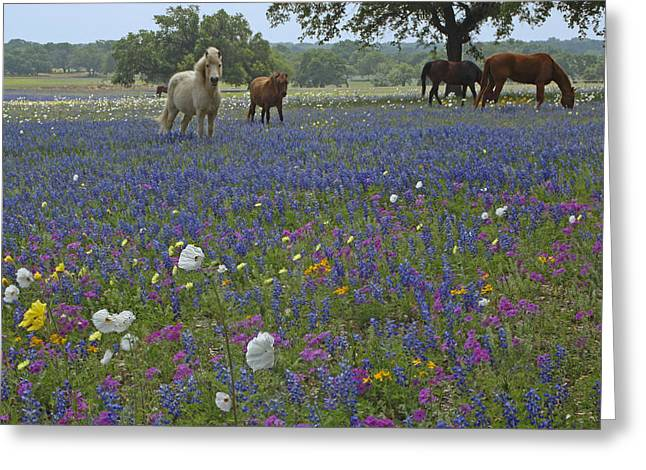 Greeting Card featuring the photograph White On Blue by Susan Rovira