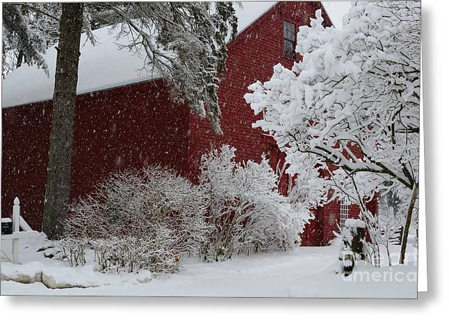 White On Red Greeting Card by Paul Noble