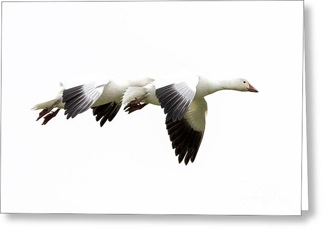 White On White Greeting Card by Mike  Dawson
