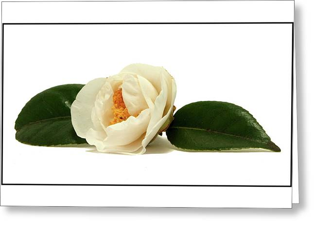 White On White Greeting Card by Ron Roberts