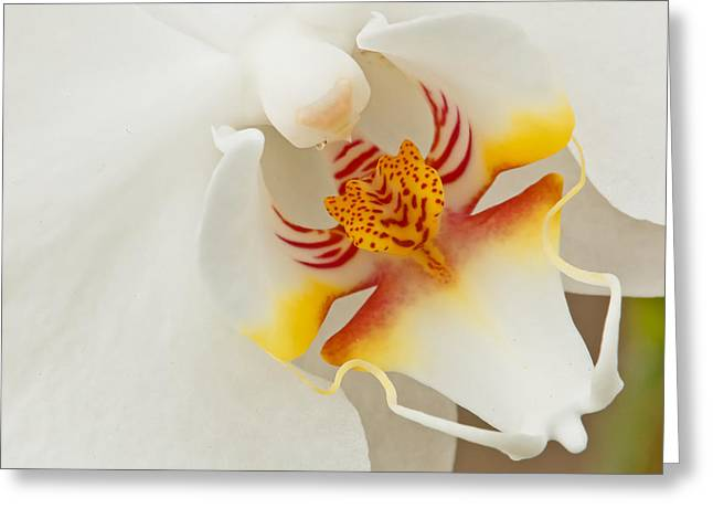 White Orchid 2 Greeting Card