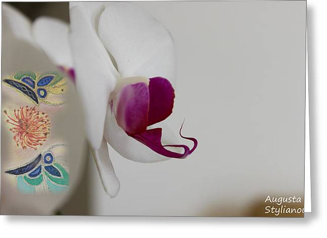 White Orchid And Butterfies Greeting Card by Augusta Stylianou