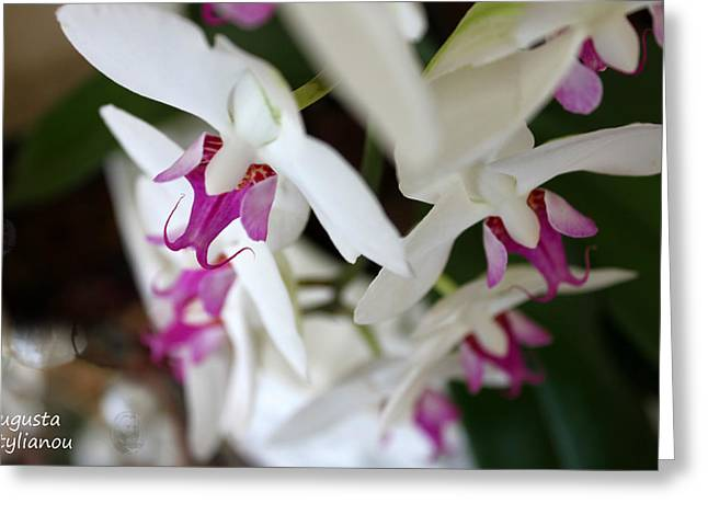 white Orchid from Obove  Greeting Card by Augusta Stylianou