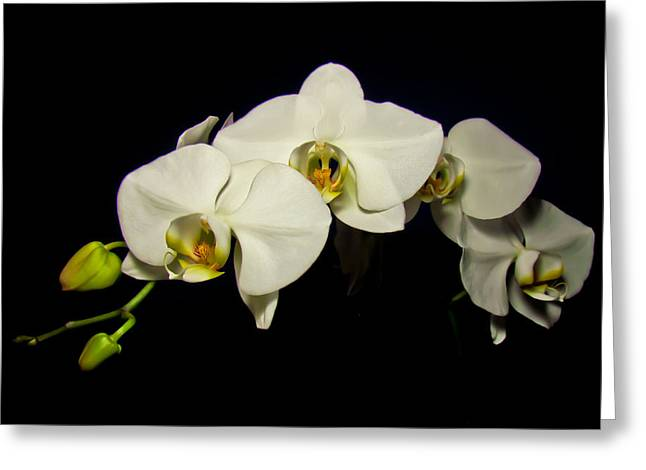 White Orchid II Greeting Card