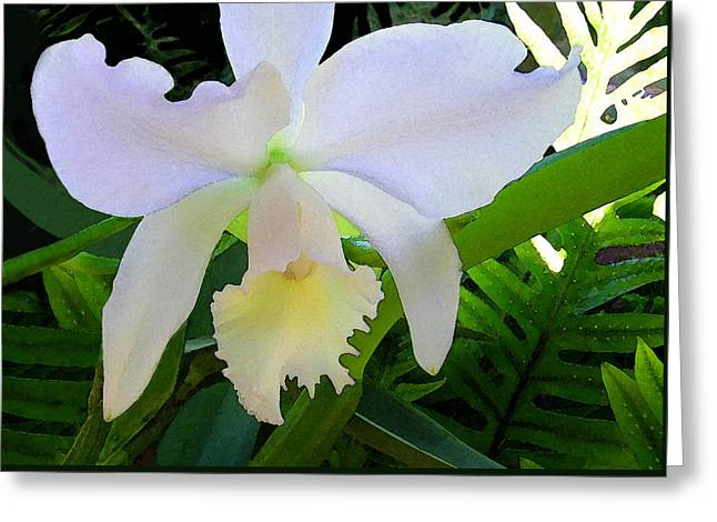 White Orchid Greeting Card by James Temple