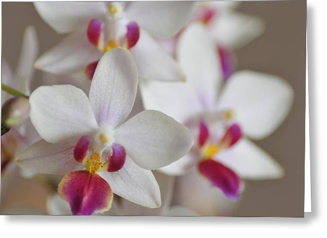 White Orchid With Purple Greeting Card by Lena Photo Art