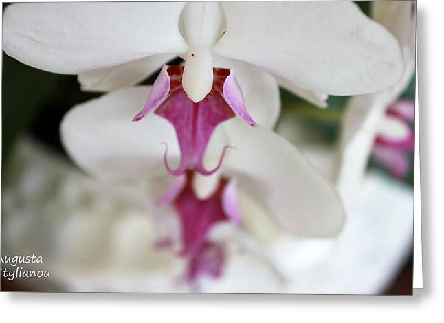 white Orchid.Close-up Greeting Card by Augusta Stylianou