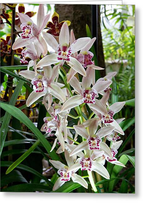 White Orchids 1 Greeting Card by Timothy Blair