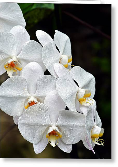 Greeting Card featuring the photograph White Orchids After The Rain by Aloha Art