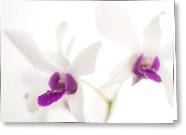 White Orchids Greeting Card by Bradley R Youngberg