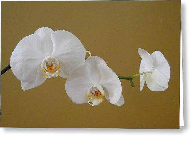 White Orchid's Greeting Card by Cindy Croal
