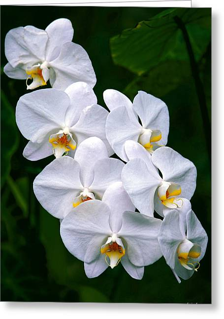 Greeting Card featuring the photograph White Orchids by Aloha Art