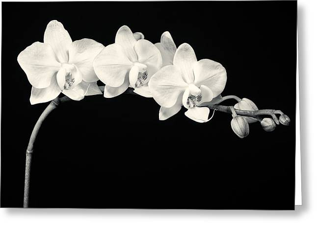 White Orchids Monochrome Greeting Card