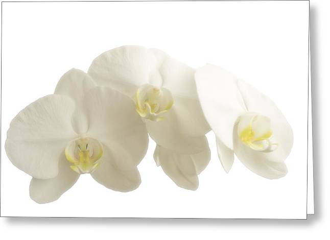 White Orchids On White Greeting Card