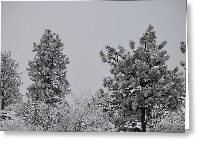 White Out Greeting Card by Greg Patzer