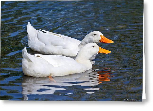 White Pekin Ducks #2 Greeting Card