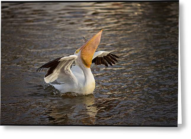 Greeting Card featuring the photograph White Pelican by Sharon Jones