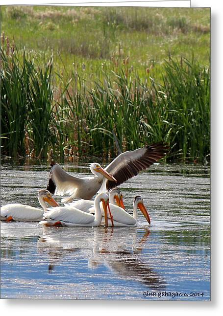 White Pelicans At Cherry River Greeting Card by Gina Gahagan