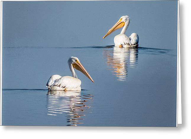 Greeting Card featuring the photograph White Pelicans by Patti Deters