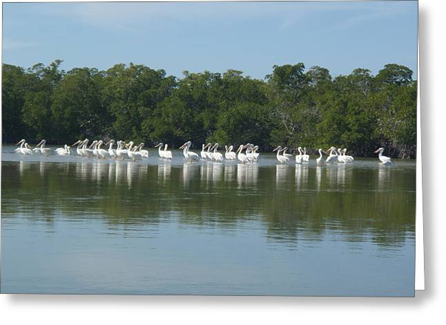 Greeting Card featuring the photograph White Pelicans by Robert Nickologianis