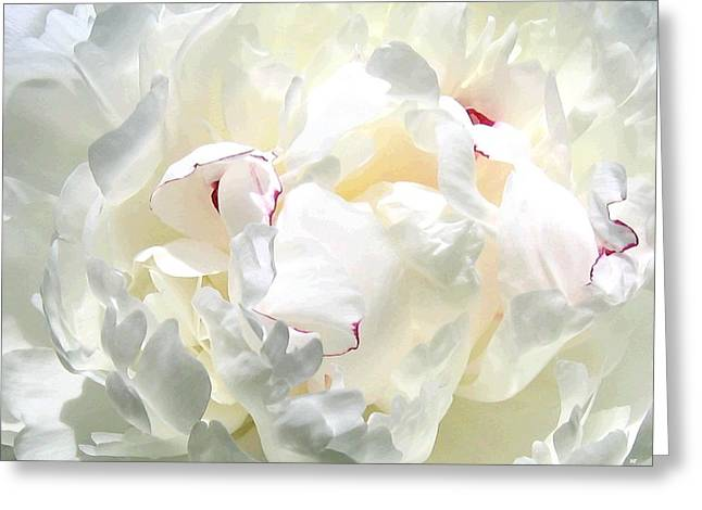 White Peony Greeting Card by Will Borden