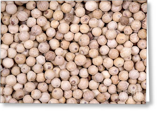 White Peppercorn Background Greeting Card by Jane Rix