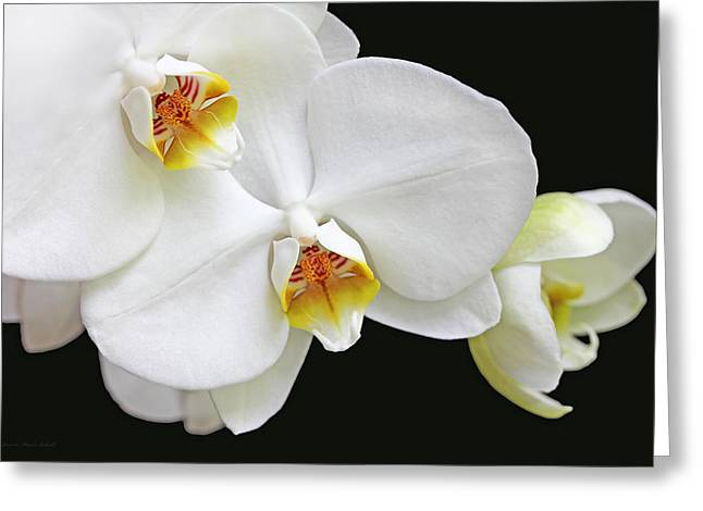 White Phalaenopsis Orchid Flowers Greeting Card by Jennie Marie Schell