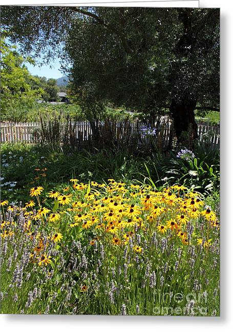 White Picket Fence Garden At Historic Jack London Cottage In Glen Ellen California 5d24561 Greeting Card by Wingsdomain Art and Photography