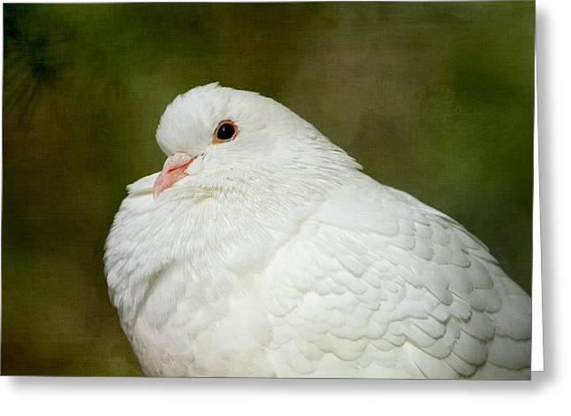 White Pigeon Greeting Card