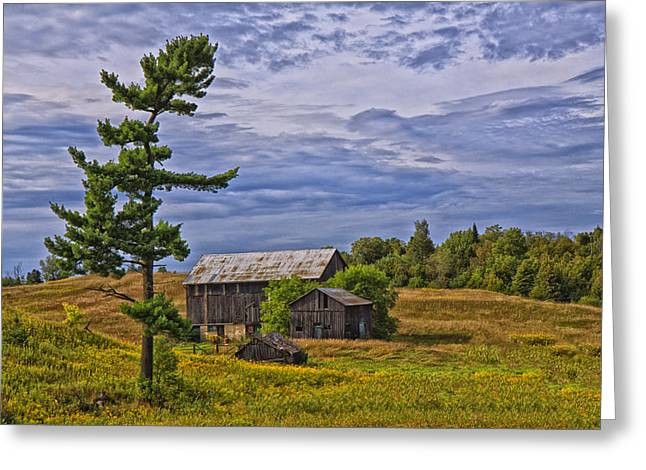 White Pine And Old Barn Greeting Card